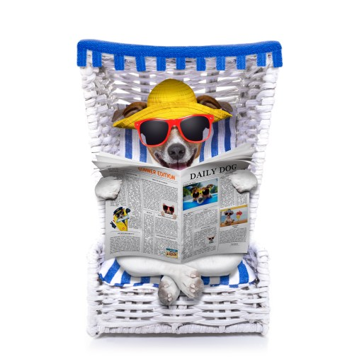 https://depositphotos.com/59960165/stock-photo-dog-beach-chair.html