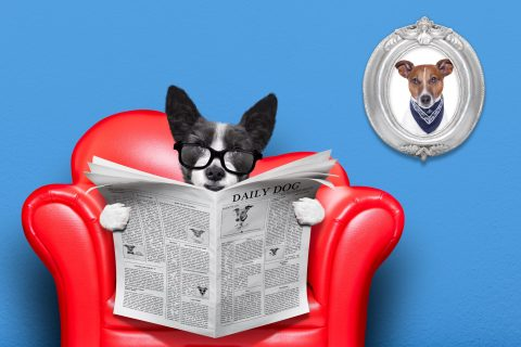 https://depositphotos.com/68397603/stock-photo-dog-reading-newspaper.html