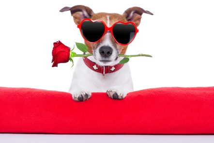 https://depositphotos.com/38671143/stock-photo-valentines-day-dog.html