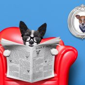 https://depositphotos.com/8634620/stock-photo-dog-reading-newspaper.html