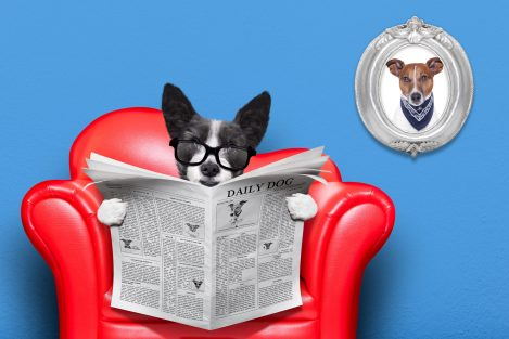 https://depositphotos.com/68397603/stock-photo-dog-reading-newspaper.html
