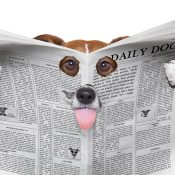 https://depositphotos.com/174198470/stock-photo-spy-dog-reading-a-newspaper.html