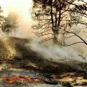 https://depositphotos.com/59987909/stock-photo-the-smoke-through-the-trees.html