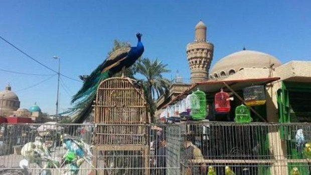 طيور لجلب الحظ في العراق