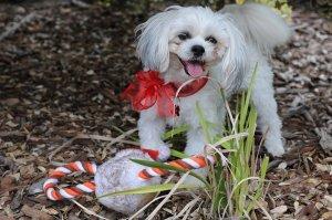 dog's stocking