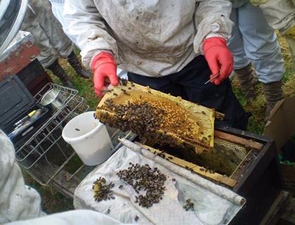 Bees-050sm