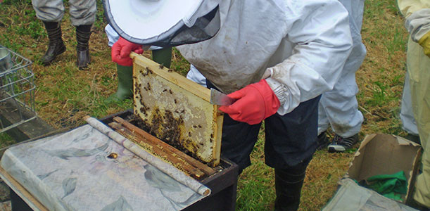 duhallow beekeepers