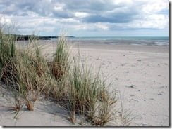 Beaches like Inchydonney in West Cork harbour a host of wildlife
