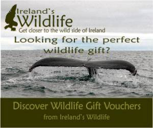 Get the perfect wildlife gift from Ireland's Wildlife