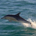 IWDG expresses concern over dolphin by-catch