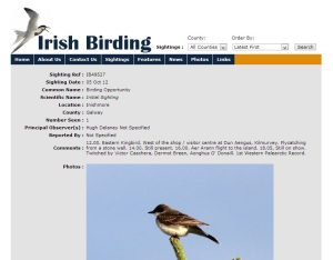 Irish Birding Eastern Kingbird