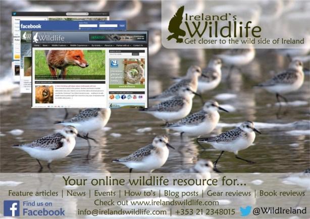 Ireland's Wildlife Poster 2