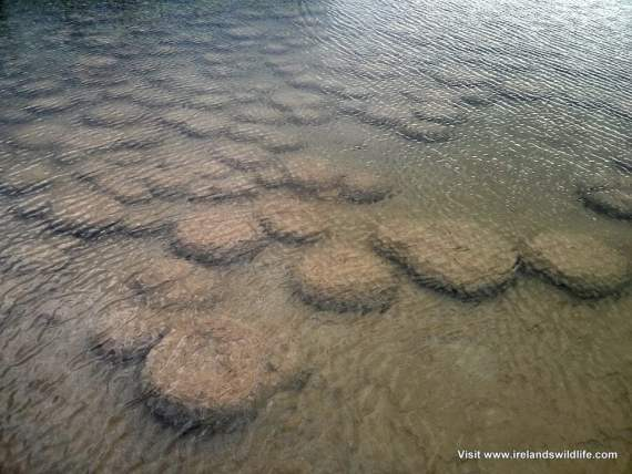 Thrombolites, Lake Clifton