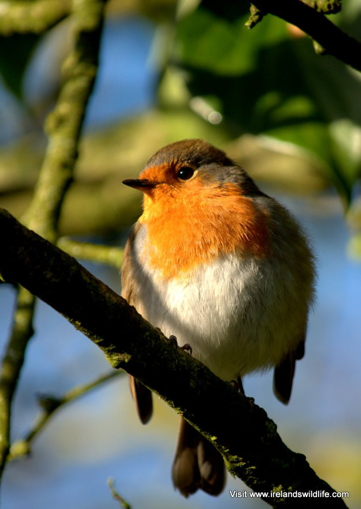9 top tips for feeding your garden birds
