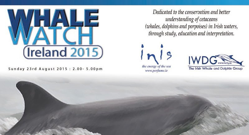 WhaleWatchIreland2015