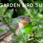 Birdwatch Ireland Garden Bird Survey kicks off Monday