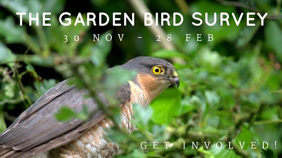 Garden Bird Survey