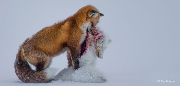 Wildlife Photographer of the Year 2016 open for entries