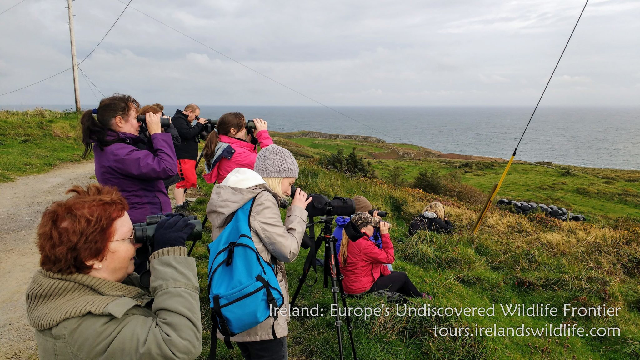 See whales and dolphins from shore on Ireland's Wild Atlantic Way.