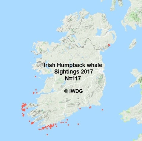 First basking sharks and humpback whales of the year off Ireland's