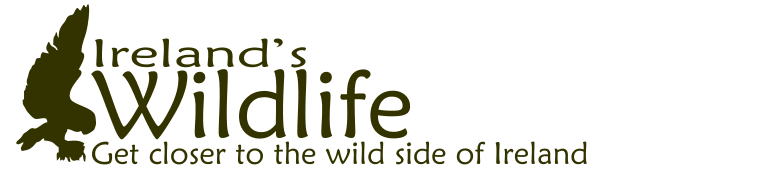 Advertise your Irish Wildlife Tour business