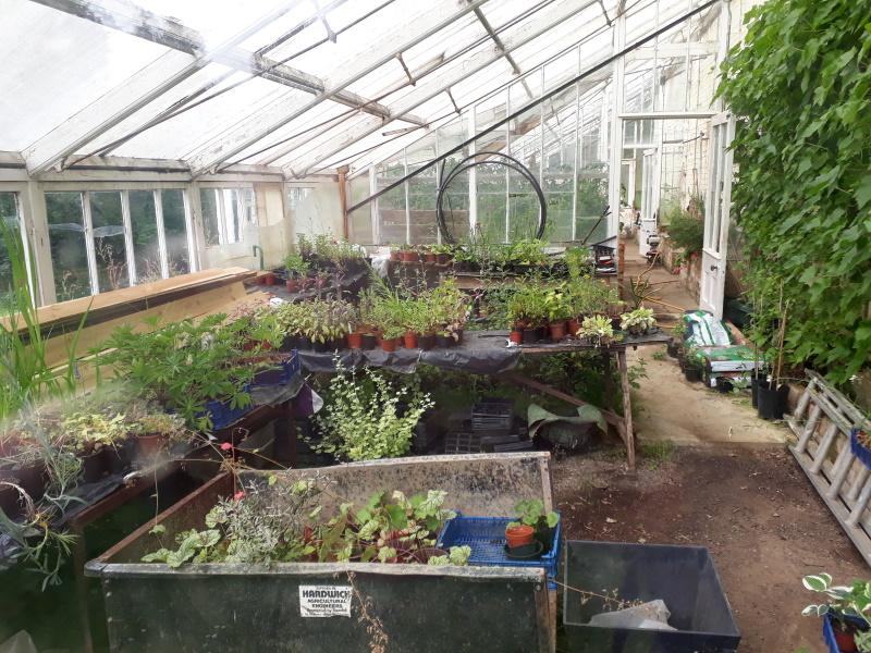 A Peace Garden