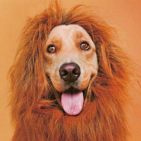 Löwenkostüm für Hunde