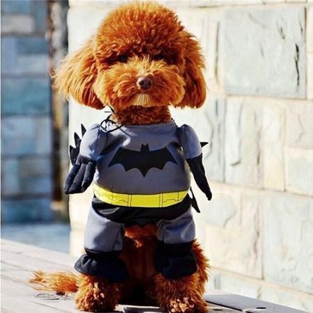 Batman Kostüm für Hunde - Batdog