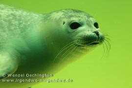 Robbe Seehundaufzuchtstation Norddeich