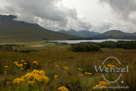 urwüchsige Natur  –  Schottland 2012