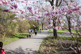 Frühling in Magdeburg - Spaziergang durch den Glacis-Park