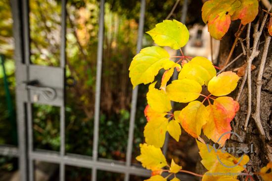 Magdeburg im Herbst - buntes Herbstlaub