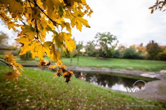 Magdeburg im Herbst - Klosterbergegarten