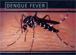 Death of a 9 y-o girl from dengue fever sparks concerns