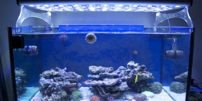Illuminazione led negli acquari marini