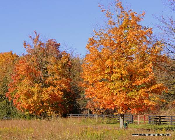 Fall Colors - Kentucky 2012