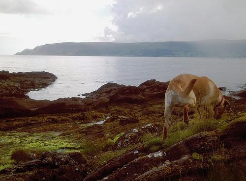 Irish Mist