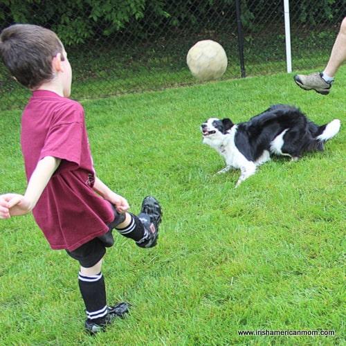 Soccer Agility - Border Collie