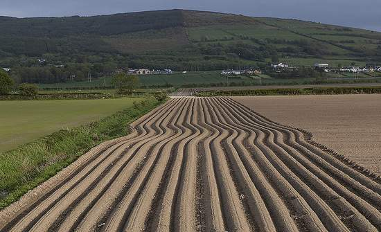 Ploughed Field in County Donegal