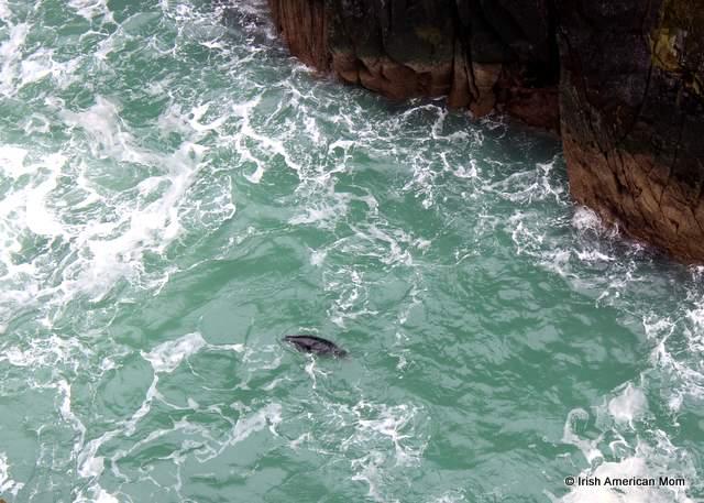 Seal at Mizen Head