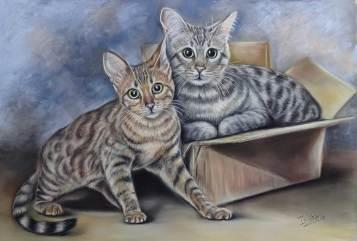 Cats portrait