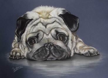 gallerydogportrait12