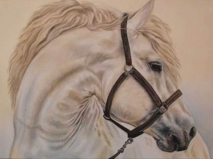 Horse Portrait by Irina Petrova