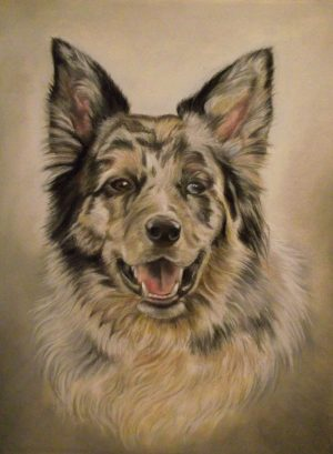 Border Collie unframed