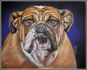 bulldog picture copy