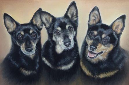 dogs-portrait