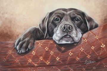 chocolate labrador custom portrait