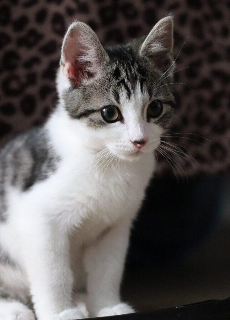 cute kitten picture