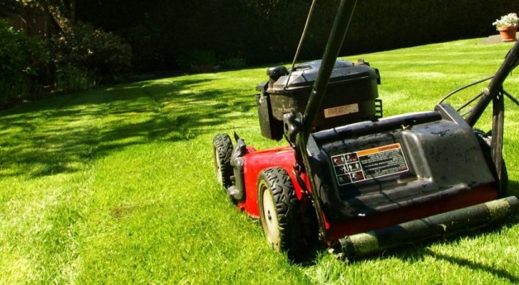 It's time to turn your attention to your lawn