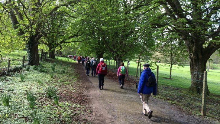 Hundreds take to new Irish Camino trail